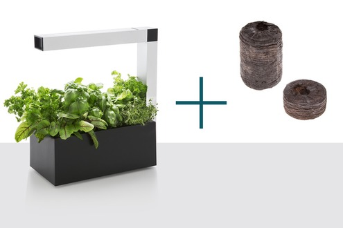 Mini potager d'intérieur Tregren HERBIE Noir + Basilic seed pod
